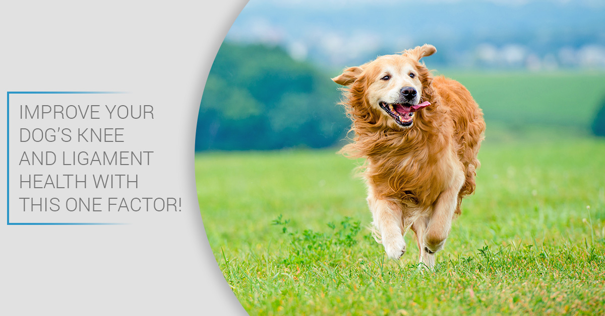 Improve Your Dog's Knee and Ligament Health With This One Factor_