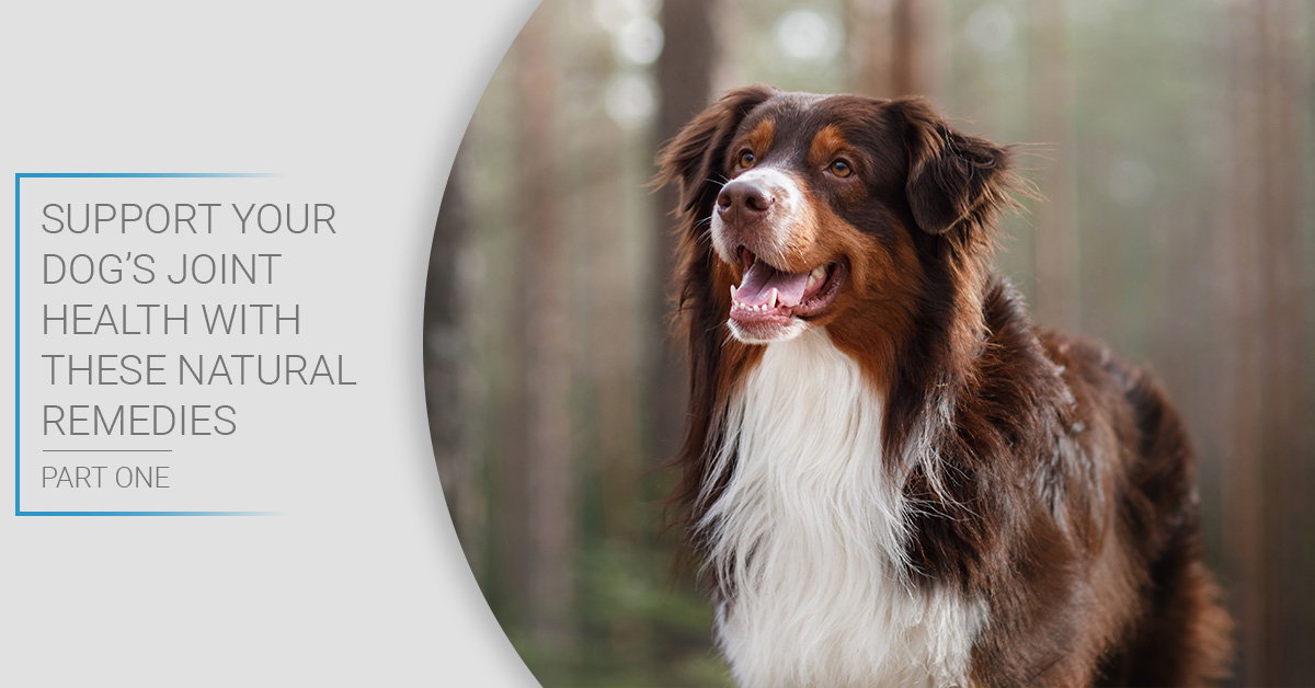 Support Your Dog's Joint Health with These Natural Remedies Part One